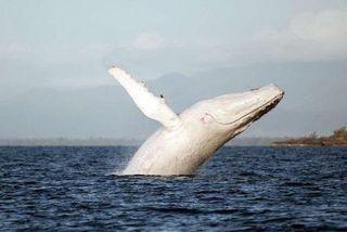 baleine à bosse pays basque photo