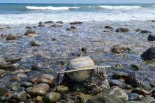 Le houlographe s'est échoué sur une plage.