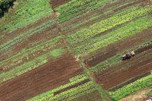Des parcelles agricoles à La Réunion (photo d'illustration).