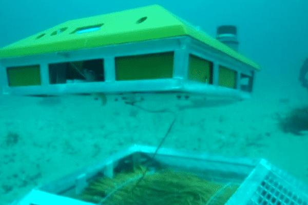 L'Ifremer étudie le potentiel des courants marins