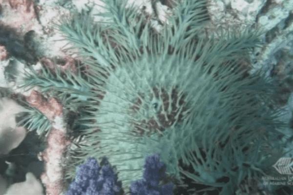Australie : la Grande Barrière de corail de nouveau menacée