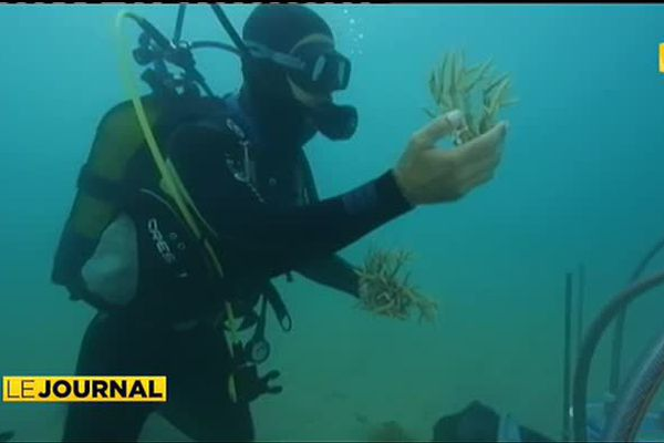 Un nouvel avenir pour les coraux