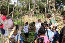 Les enfants de l'école élémentaire d'Awala Yalimapo découvrent l'abattis pédagogique