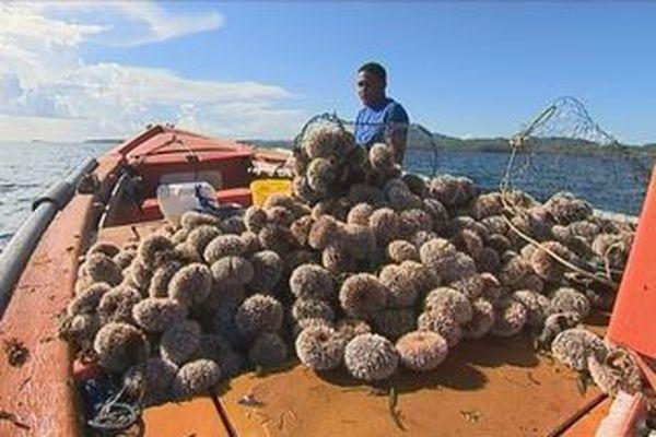 Pêcheurs d'oursins