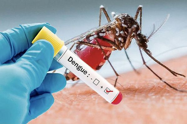 dengue futuna