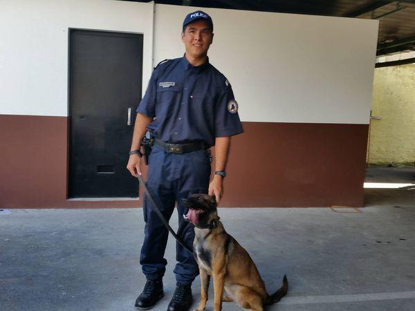 Jipsy chien policier 2