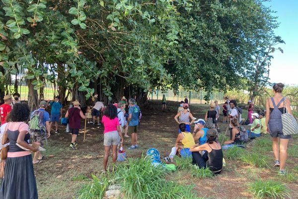 Manifestation contre l'abattage des arbres à Casabona