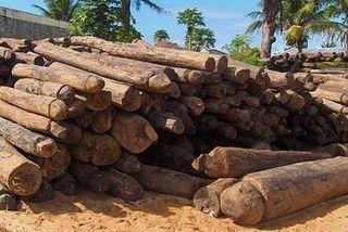 Trafix de bois précieux à Madagascar
