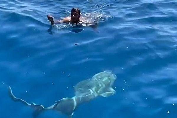 Sauvetage d'un pinson au milieu des requins aux Maldives