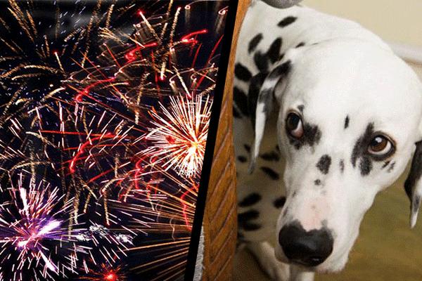 Attention feux d'artifice, précautions animaux domestiques