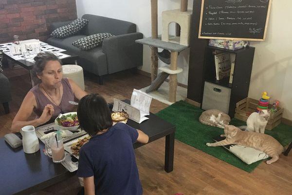 Le premier bar à chats de La Réunion a ouvert à la Rivière Saint-Louis