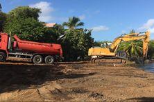 Un chantier d'enlèvement des sargasses échouées dans la zone de Frégate au François.