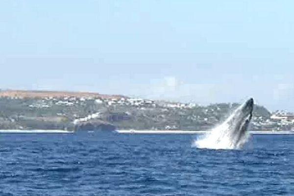 Observation des baleines : une charte, une surveillance et un label...