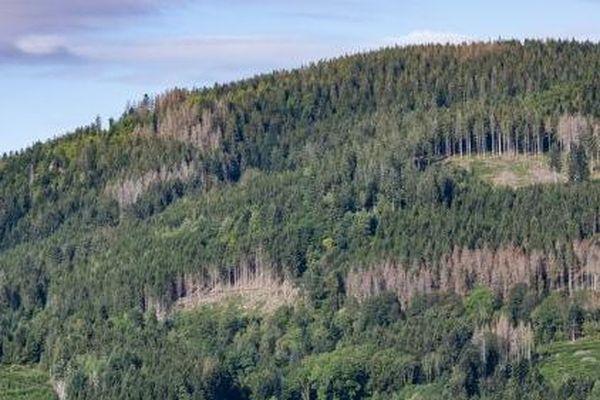foret boreale saint-pierre miquelon