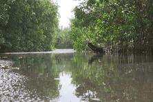 La rivière Lézarde au Lamentin en Martinique