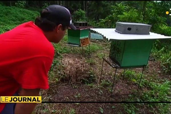Les abeilles, victimes collatérales de la démoustication