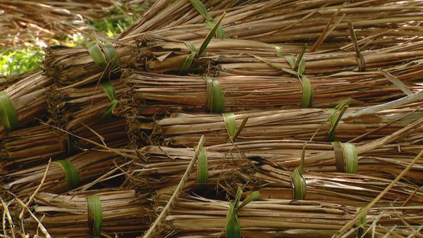Bottes de feuilles de cocotier. Toiture case
