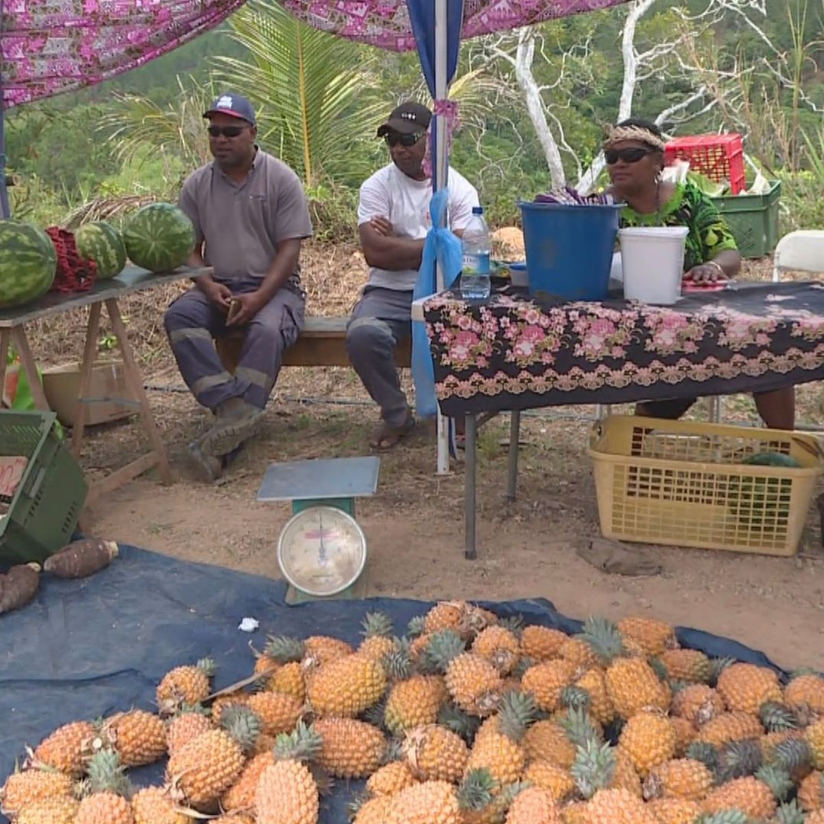 Les ananas de Koh au cœur de l'été