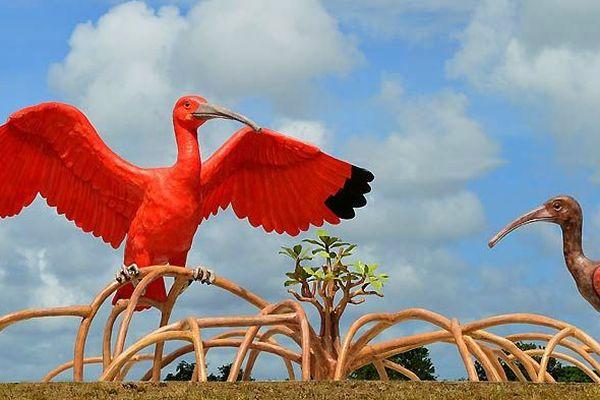 Les Ibis de Sinnamary