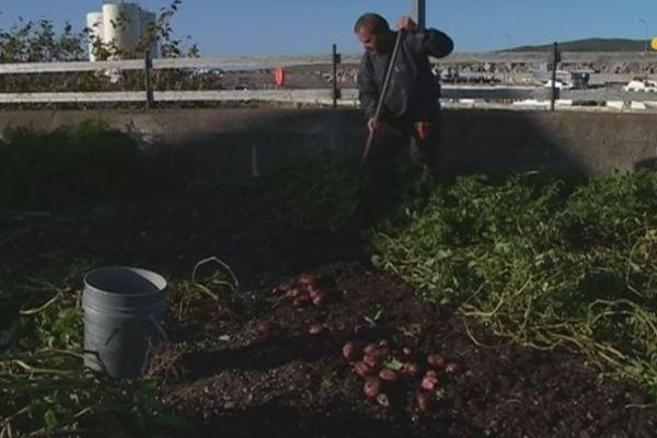 À Miquelon, il fait bon cultiver son jardin