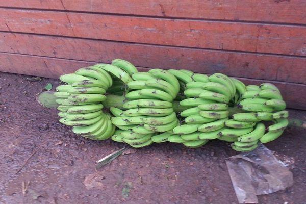 bananes marché