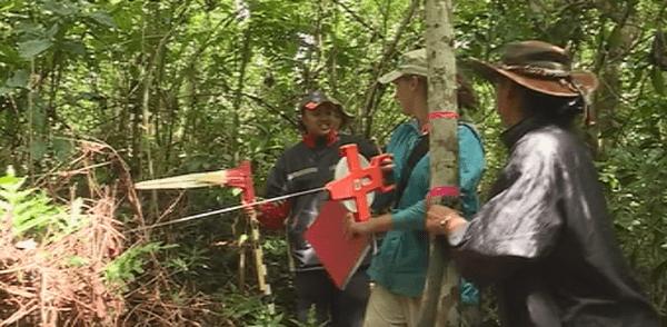 mission sur la forêt wallisienne