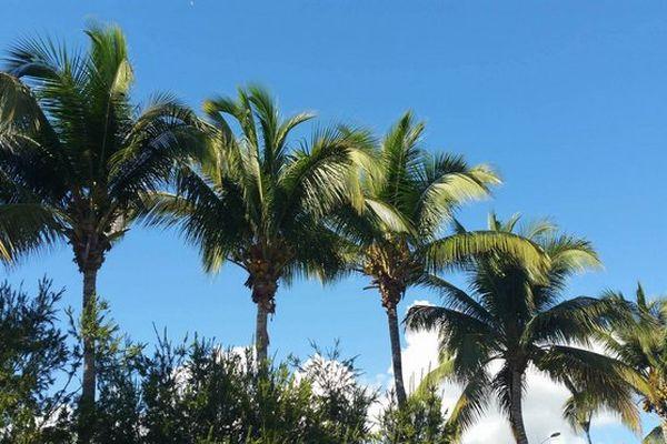 Ciel bleu au dessus des cocotiers