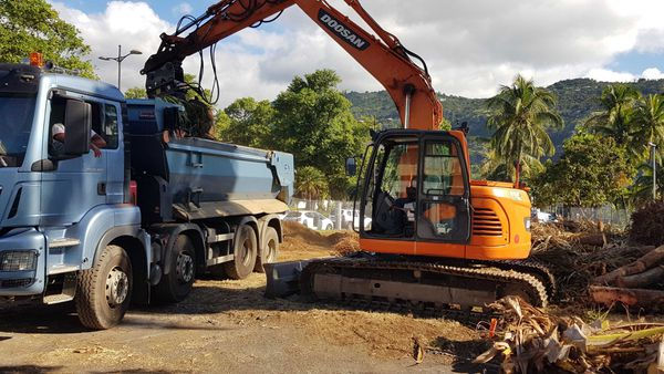 Abattage de cocotiers