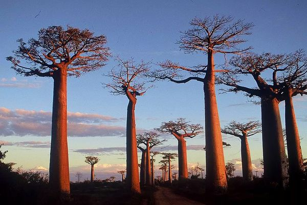 Préservation de la nature à Madagascar septembre 2021 COP 26 en novembre