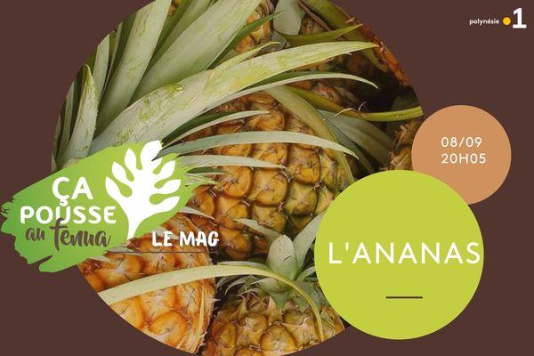 Ça pousse au fenua : L'ananas