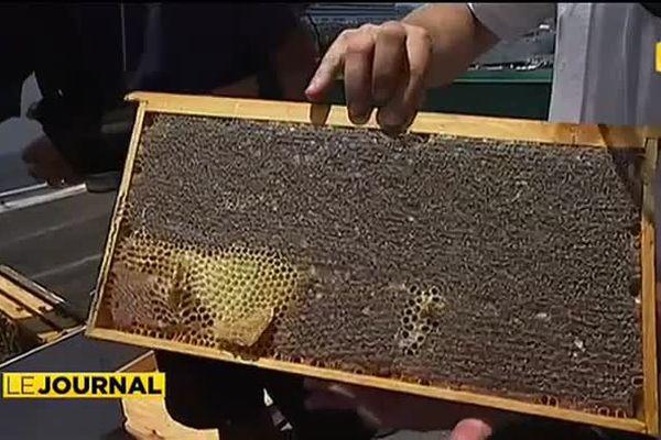 Du miel au dessus des toits : l'apiculture 100% urbain