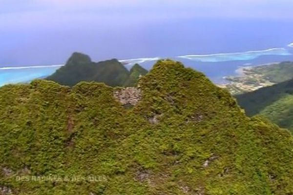Polynésie Des racines et des ailes