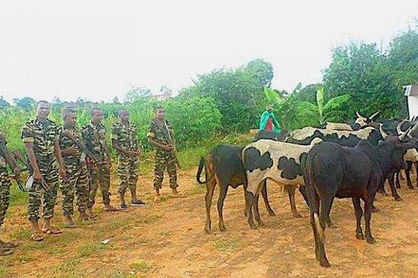 Les gendarmes malgaches interviennent dans le Sud pour récupérer des zébus janvier 2019