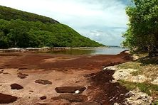 Il y a une semaine, les sargasses jonchaient entièrement la plage de la Porte d'enfer/Anse Bertrand ; Isaac a évacué, vers le large, le gros de ces algues.