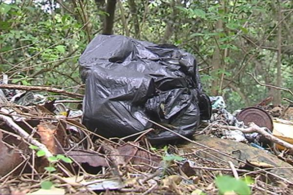pollution plastique mangrove 180316