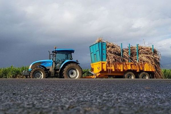 La campagne sucrière va reprendre à La Réunion.