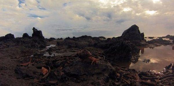 Détritus sur la plage