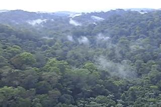 Forêt de Guyane