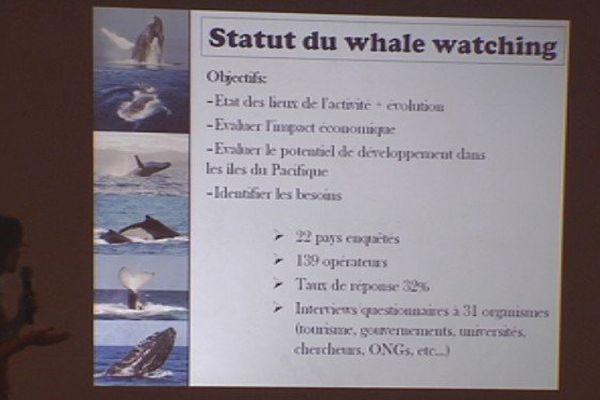 Journées bleues : mieux réglementer l'observation des baleines