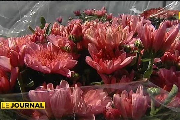Le chrysanthème, symbole de la Toussaint