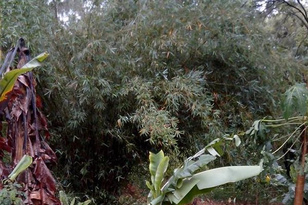 Koné, le 18 janvier 2014