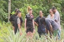 Stage sur la production d'ananas à Futuna