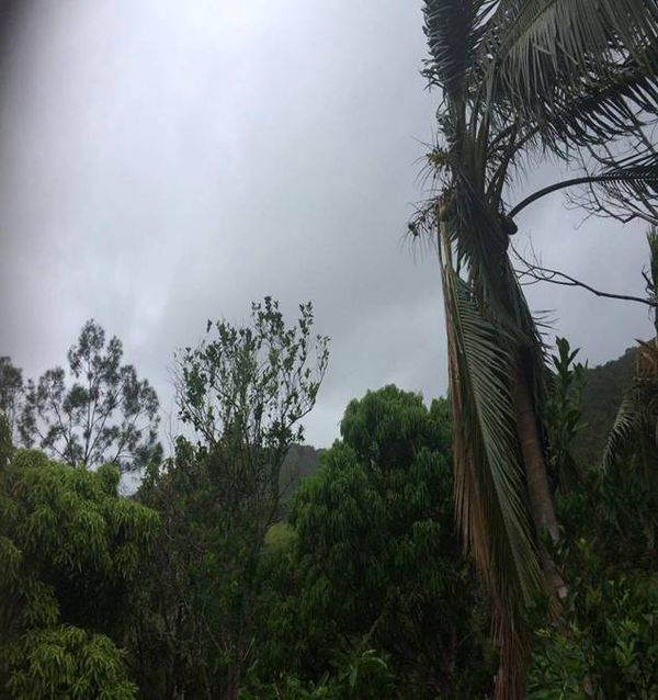 Photo Arbre vent Canala cyclone Donna (mardi 9 mai 2017)