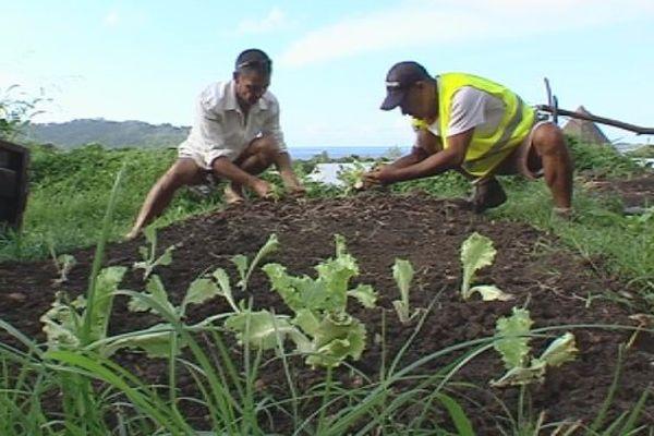 Bora Bora : portrait d'un agriculteur 100% naturel