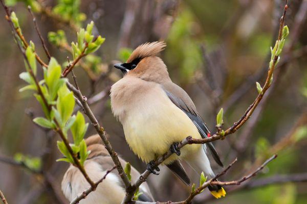 oiseau St pierre