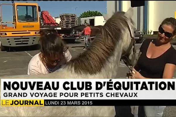 Sept nouveaux chevaux pour le poney club de la presqu'île