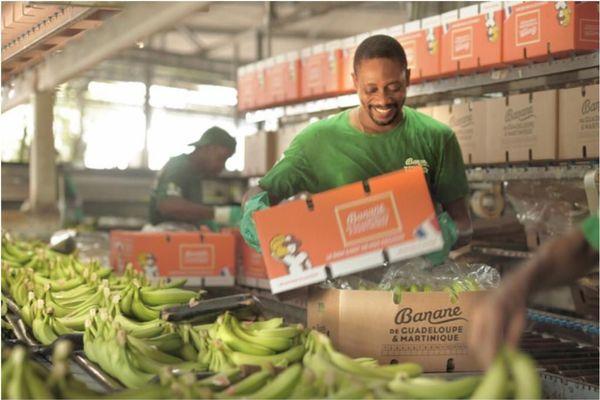 l'UGPBAN / Producteurs de Bananes de Guadeloupe et de Martinique