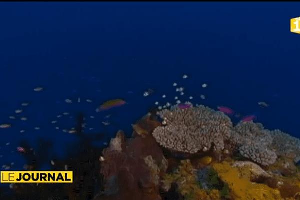 Primé pour ses travaux sur le blanchiment des coraux