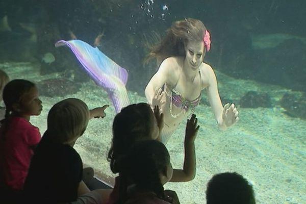 Sirène à l'aquarium de Guadeloupe