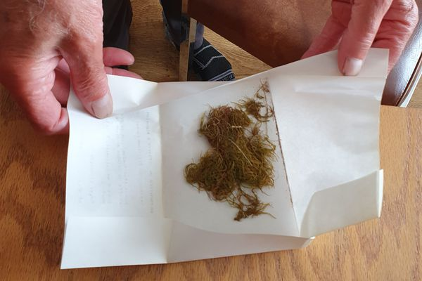 Un échantillon de mousse